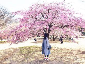 Sakura No Hana